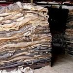 Ограничение на экспорт шкур КРС привело к возобновлению работы трёх предприятий