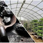 В ЮКО из-за дефицита угля владельцы тепличных хозяйств опасаются неурожая