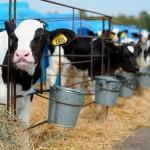 Перемены в господдержке животноводства (для анализа)