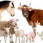 Долги по субсидиям для развития животноводства в Актюбинской области составили порядка 6 млрд тенге