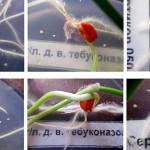 Обработка семян – укрепление и защита корневой системы