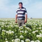 Качественные семена – решающий фактор в картофелеводстве
