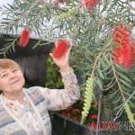 У садовода Людмилы Земляной из ВКО в теплице расцвел «предвестник весны»