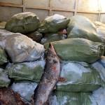 Браконьеров из ВКО поймали с 2,5 тоннами рыбы по пути в Павлодар