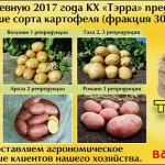 Хорошие и качественные семена – залог высокого урожая