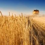 Итоги опроса от «АгроИнфо»: Что, на Ваш взгляд, является приоритетным в работе казахстанского сельхозпроизводителя?