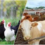 В ЮКО создано 438 сельскохозяйственных кооперативов