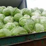 Более 320 тонн подкарантинной продукции не допущено к ввозу в Новосибирскую область из Казахстана и Кыргызстана