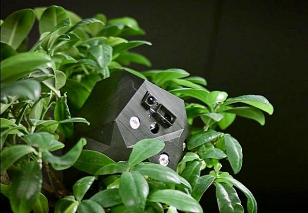 picture_flora-robotica-simbio_303_s1