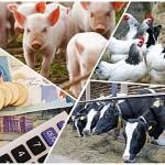 В Актюбинской области начали выплачивать субсидии сельхозпроизводителям