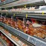 Представители птицеводства просят пересмотреть распределение дотаций