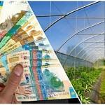 Южный Казахстан: Субсидии для села