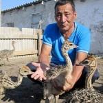 Актюбинский физрук занялся выращиванием африканских страусов
