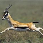 Минсельхоз РК провёл брифинг по вопросам охраны животного мира