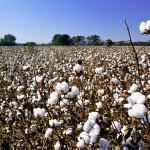 87 продовольственных кооперативов создано в Мактааральском районе ЮКО