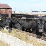 Мясомолочный кооператив готов к работе