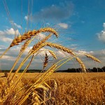 Казахстан: Прогноз погоды на лето 2017 года