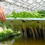 Аграрлық ғылым мен инновацияның тынысы қандай?