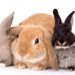 Чем болеют кролики?