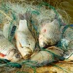 В Казахстане продолжается широкомасштабная рыбоохранная акция «БЕКІРЕ-2017»