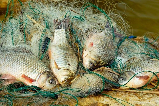 ohrana-ryby