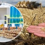 Итоги опроса: Какой фактор больше остальных воздействует на качественные показатели казахстанского зерна?