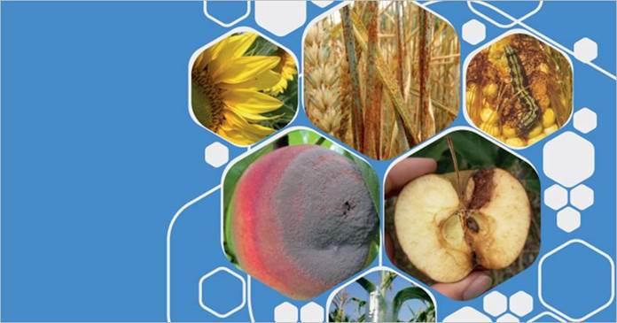 Обложка книги «Интегрированная защита растений от основных вредителей и болезней в Восточной Европе и на Кавказе» ©ФАО