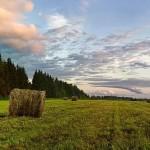 Шекара белдеуiндегi ауыл шаруашылығы жерлерi жалға берiлмейдi – АШМ