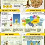 Инфографика «Этот зловредный овсюг»