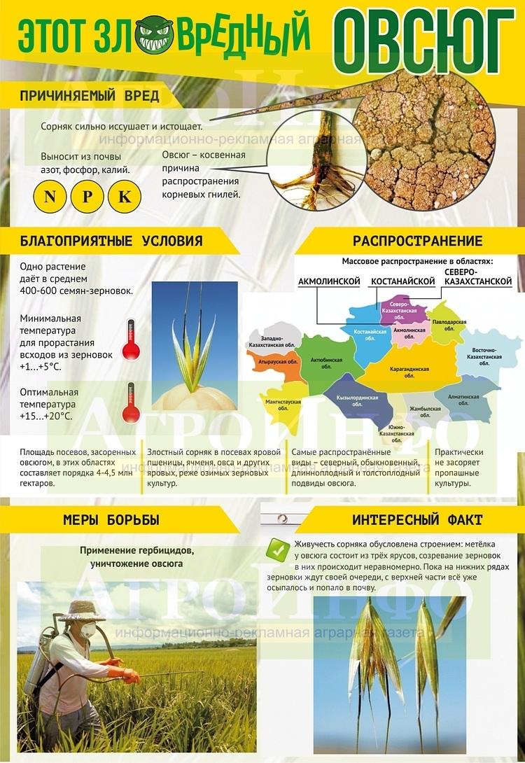 Инфографика (Овсюг) А3_10_СО