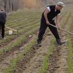 Загрязнение почвы находится под пристальным наблюдением