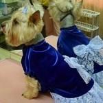Интернет-ателье для домашних животных появилось в Костанайской области