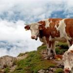 Современные методы в животноводстве