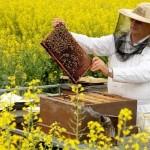 Пчеловодство – прибыльный бизнес