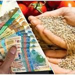 Казахстан: Субсидирование семеноводства по-новому