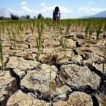 Климатологи: Казахстан может лишиться своих зерновых областей