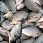 11 предприятий Казахстана могут экспортировать рыбную продукцию в страны ЕС