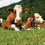Введено значительное облегчение по залогам для сельхозкооперативов в РК