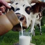 Перестать субсидировать экспорт молочного сырья предлагают в Казахстане