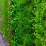 Вертикальные фермы Plenty способны производить в 350 раз больше урожая, чем обычные фермы