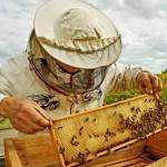 Пчеловодам Казахстана нужна поддержка