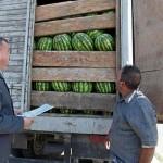 Более 70 тонн фруктов и овощей из Казахстана и Кыргызстана пытались незаконно ввезти на территорию Новосибирской области