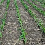 День поля: агроинновации от Германии