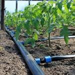 Президент рассказал о том, как технологии развивают сельское хозяйство