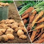 Продать сельхозпродукцию через SMS