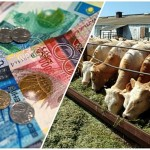 На что чаще всего берут кредиты казахстанские фермеры