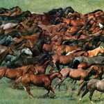 Лошади с GPS-навигаторами пасутся в Павлодарской области
