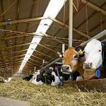 Французы вкладывают €1 млн в молочную ферму в Павлодарской области
