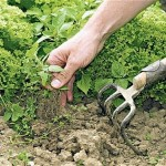 Толеутай Рахимбеков: Наши аграрии ведут натуральное хозяйство на уровне феодализма