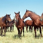 В Карагандинской области животноводам не хватает пастбищ